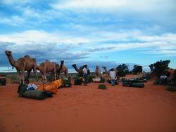 Unloading the camels, Beltana Station Camel Safaris South Australia