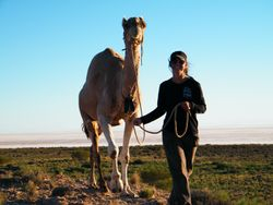 Camel Training. Kelly Cambell with Charlie, Outback Australian Camels, Beltanma Station, South Australia