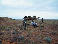 Ontop of the hill, Beltana Station Camel Safaris, Outback Australian Camels, Flinders RAnges, South Australia