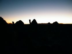 Camels in the Morning, Camel safaris on Beltana Station, South Australia
