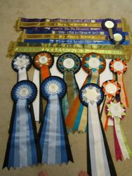 In show sashes & rosettes