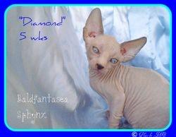 Diamond 5 wks