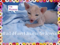 Picasso at 3 wks