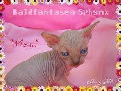 Mona at 4 wks
