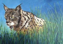 A Spanish Lynx.