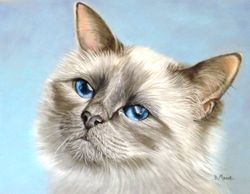 Another Royal Birman cat.