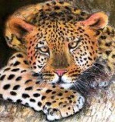 sleepy Leopard.