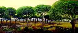 Pine Trees , Sancti Petri (sold)