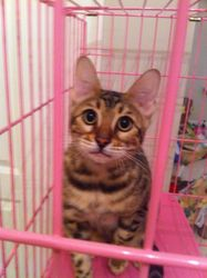 Angel Gold in her Pink Cage