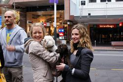 SPCA Auckland's Cupcake Day 2011