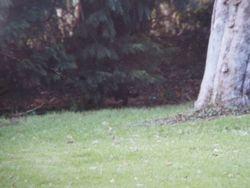 East Sussex cat