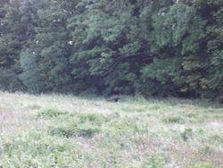 West Sussex cat