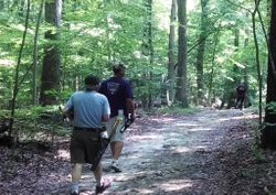Nice pathway through the woods