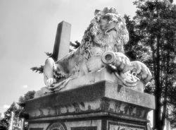 Laurel Hill Lion