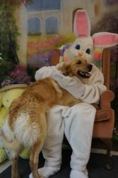 Easter Bunny and Rusty
