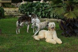 Three breeds I love