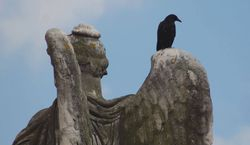 Crow on statue, Le Louvre, France