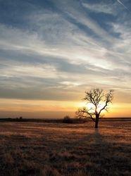 Tuttle Sunset Tree