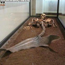 sirena skelet 1