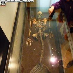 sirena skelet 2