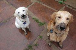 Izzy and Rocky