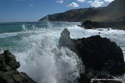Wild Seas3