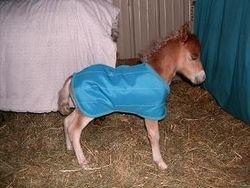 Water repellant foal blanket