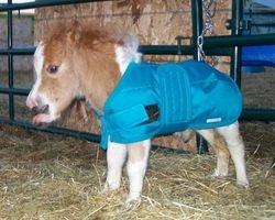 light cordura foal blanket
