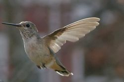 In Flight- Still wing