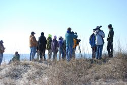 Birders watching the Snowy Owl