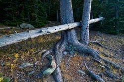 Amazing Fell Tree Detail