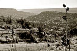 Pala Duro Canyon