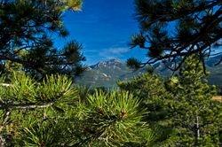 Longs Peak and Pines