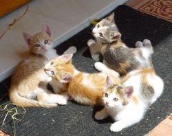 4 more kittens - Torre del Mar