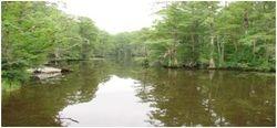 Bennett's Creek 1