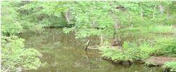 Bennett's Creek 2
