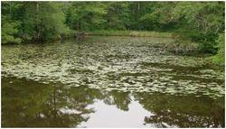 Bennett's Creek 3
