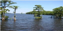 Chowan River from Reservation 1