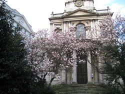 Magnolias by St Mary Le Strand