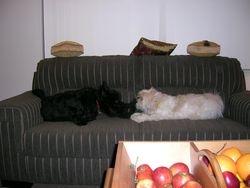 Baxter & Bobby