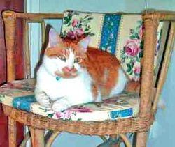 chair, Ponch