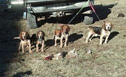 Rabbit Hunting 1/1/2014