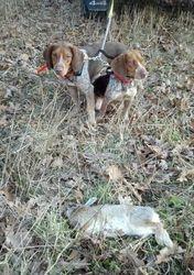 Rabbit Hunting 1/4/2014