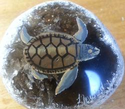 Turtle on emma egg