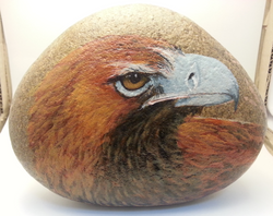 eagle on river stone