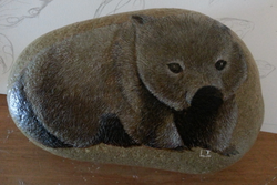 Wombat on river stone