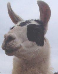 Farley - Close Up