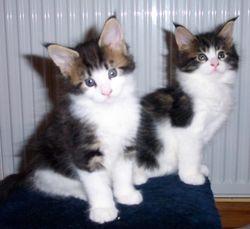 Two of Bibi's kittens