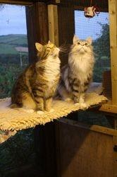 Suzy & Bibi