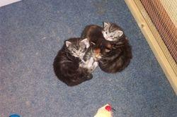 Rosies kittens